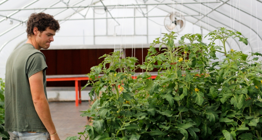 Richard Hendley considers picking off some tomatoes at the greenhouse at the University of Georgia farm for the Certificate Program of Organic Agriculture on March 1, 2012. (© Sarah Osbourne, Sarahkoz2@gmail.com)